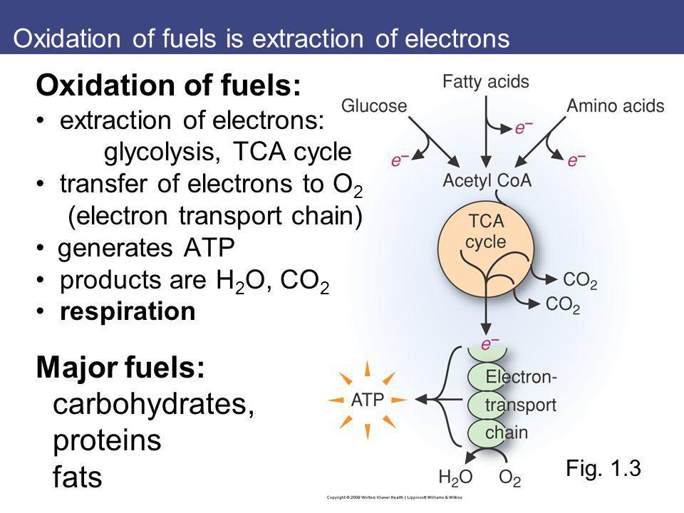 Oxidation of fuels is extraction of electrons