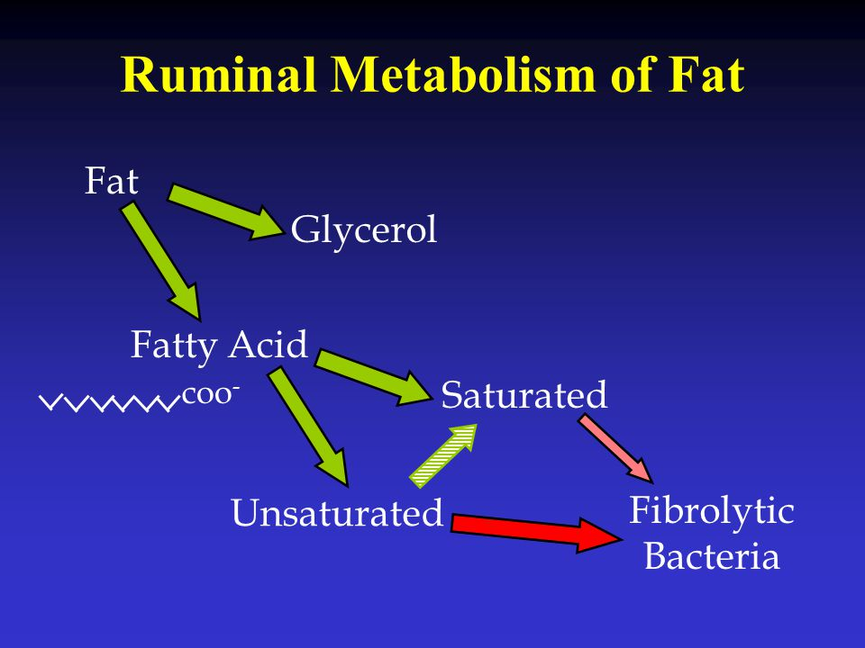 Ruminal Metabolism of Fat