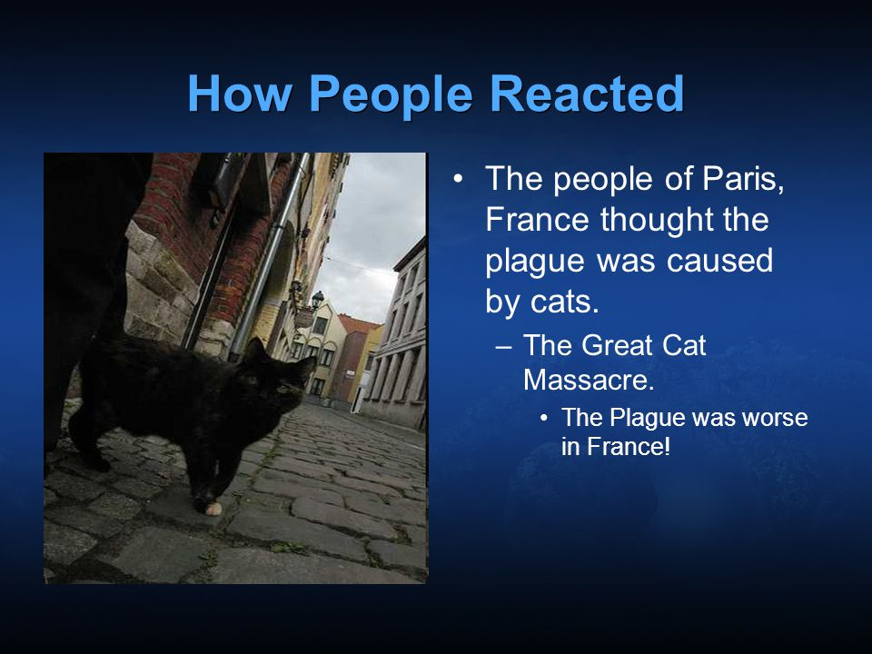 How People Reacted The people of Paris, France thought the plague was caused by cats. The Great Cat Massacre.