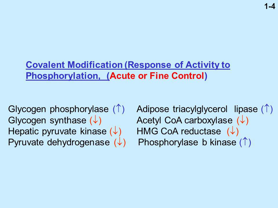 Covalent Modification (Response of Activity to
