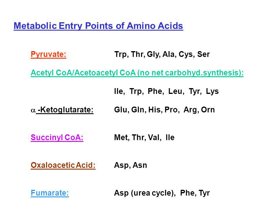 Metabolic Entry Points of Amino Acids