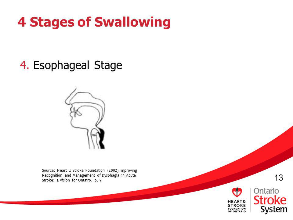 4 Stages of Swallowing 4. Esophageal Stage