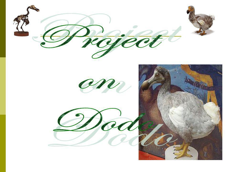 Project on Dodo
