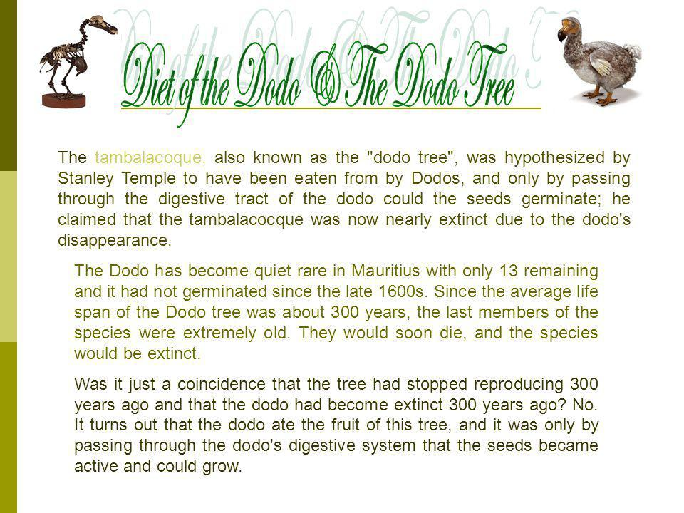 Diet of the Dodo & The Dodo Tree