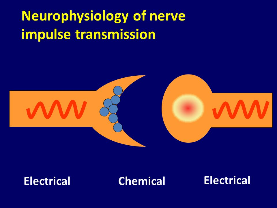Neurophysiology of nerve impulse transmission
