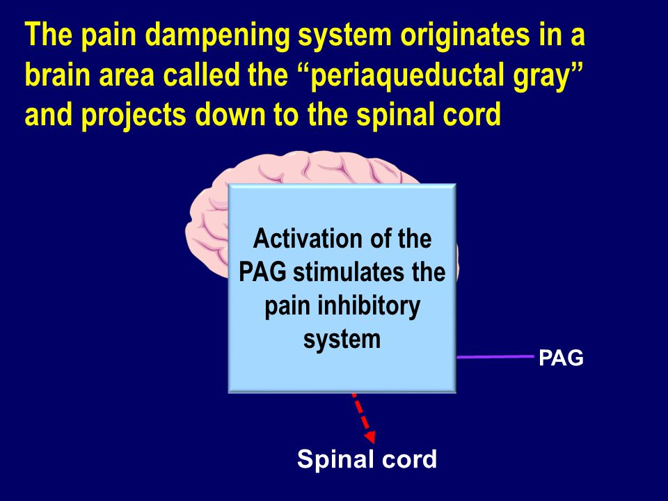 Activation of the PAG stimulates the pain inhibitory system