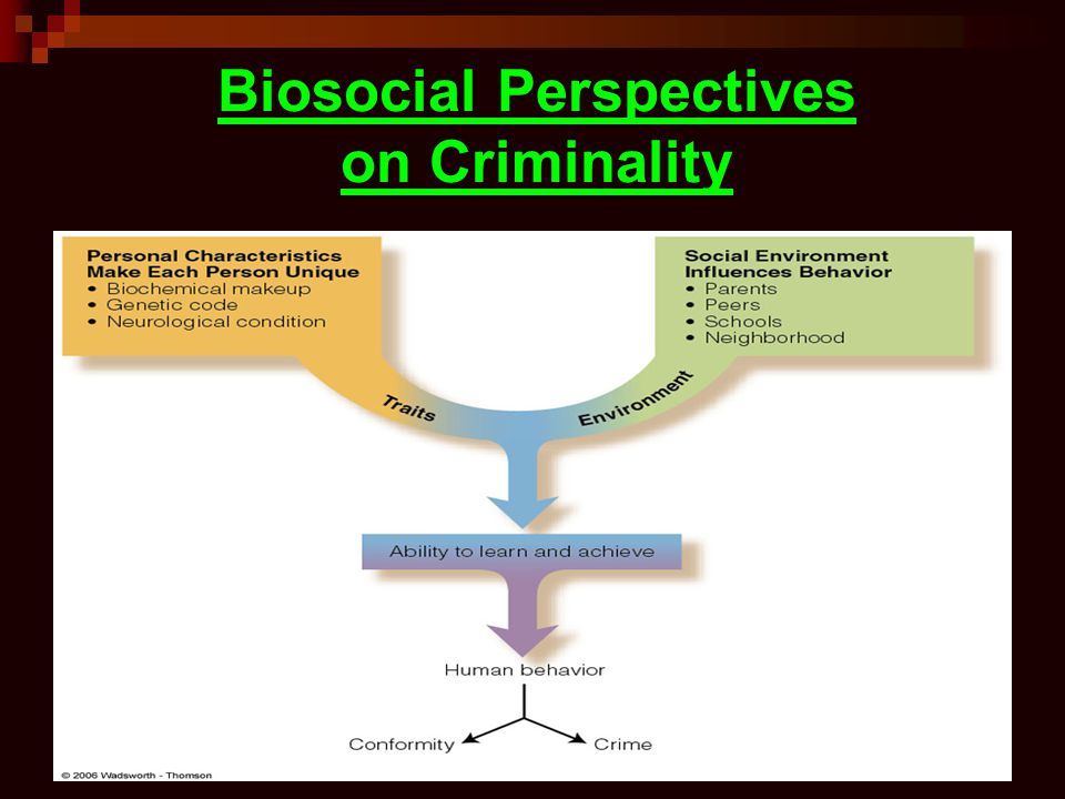 Biosocial Perspectives on Criminality