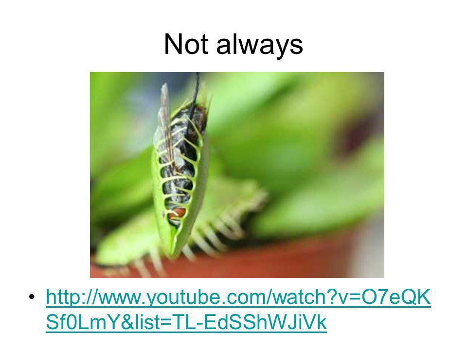 Not always http://www.youtube.com/watch v=O7eQKSf0LmY&list=TL-EdSShWJiVk