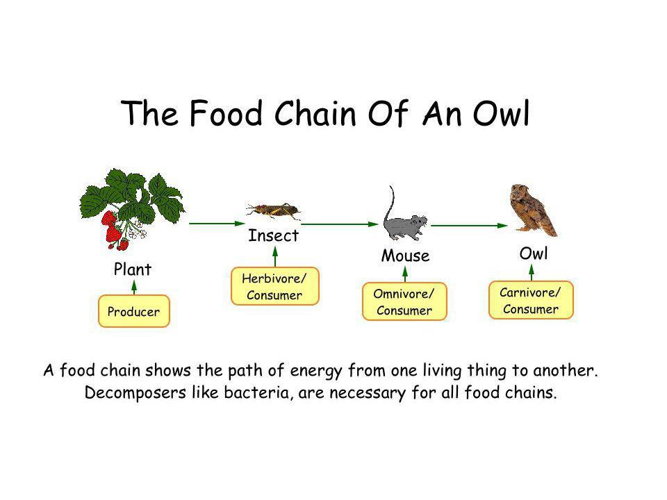 Activity 2 What does a food chain show What does a food web show