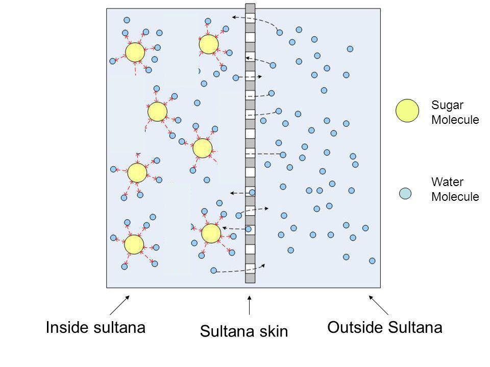 Inside sultana Outside Sultana Sultana skin Sugar Molecule