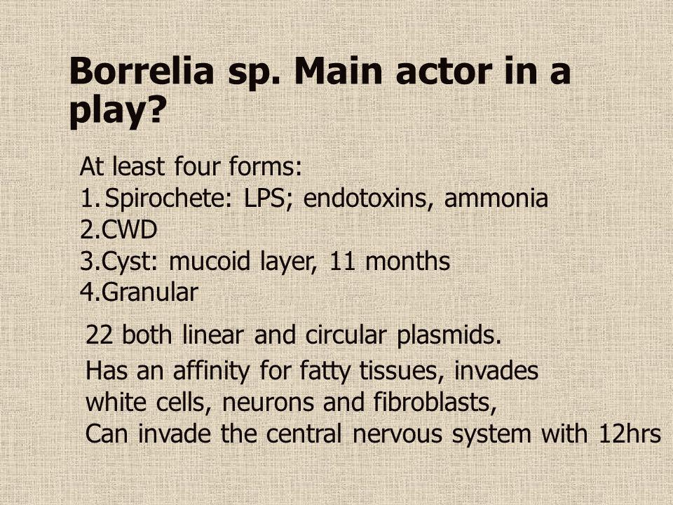 Borrelia sp. Main actor in a play