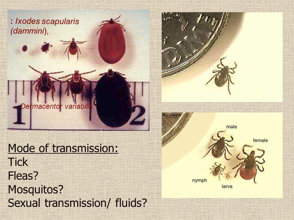 Sexual transmission/ fluids