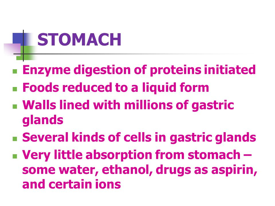 STOMACH Enzyme digestion of proteins initiated