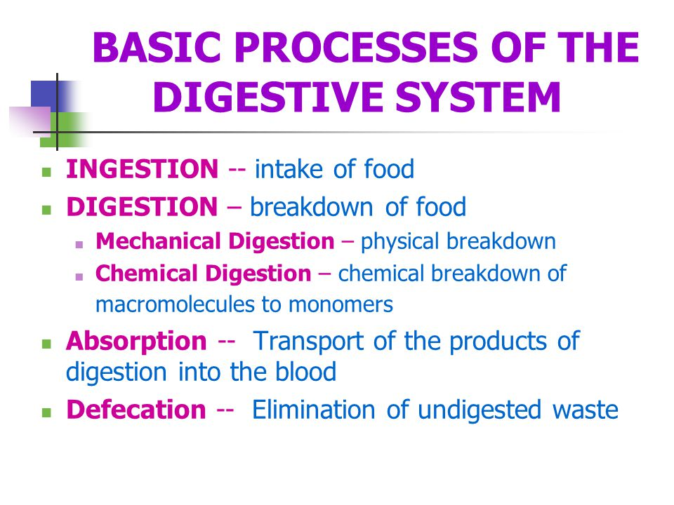 BASIC PROCESSES OF THE DIGESTIVE SYSTEM