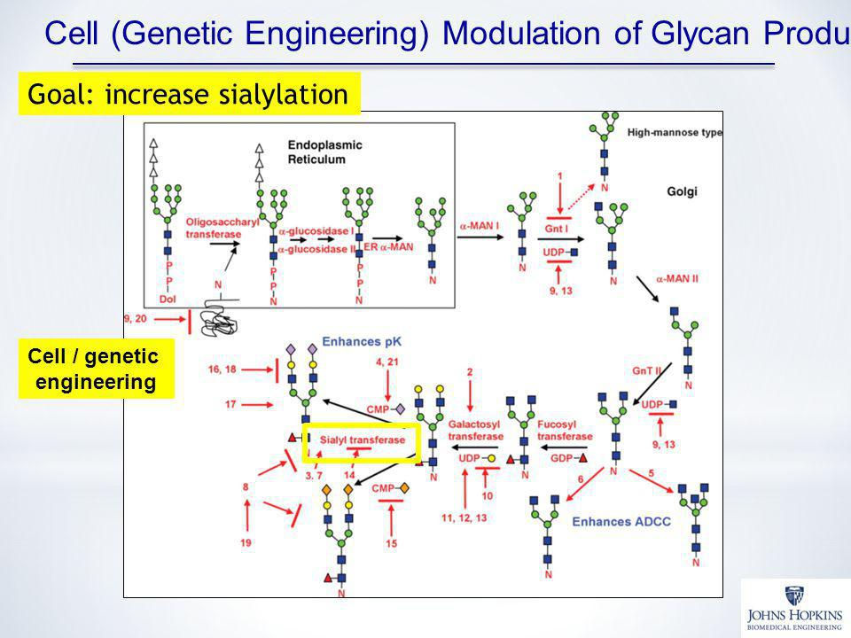 Cell (Genetic Engineering) Modulation of Glycan Production