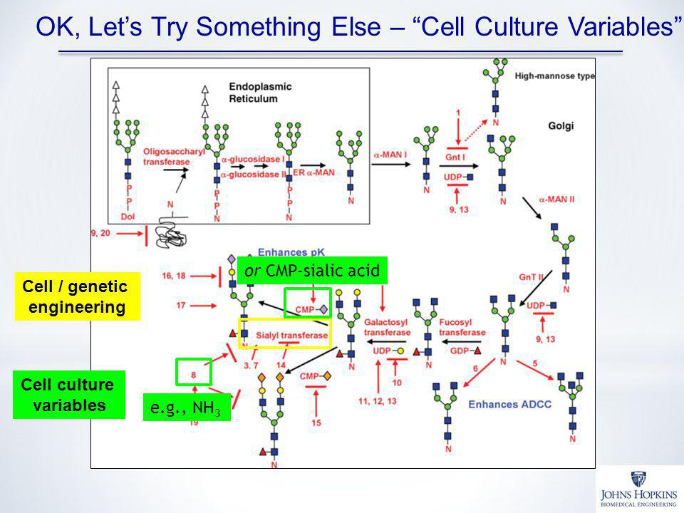 OK, Let's Try Something Else – Cell Culture Variables