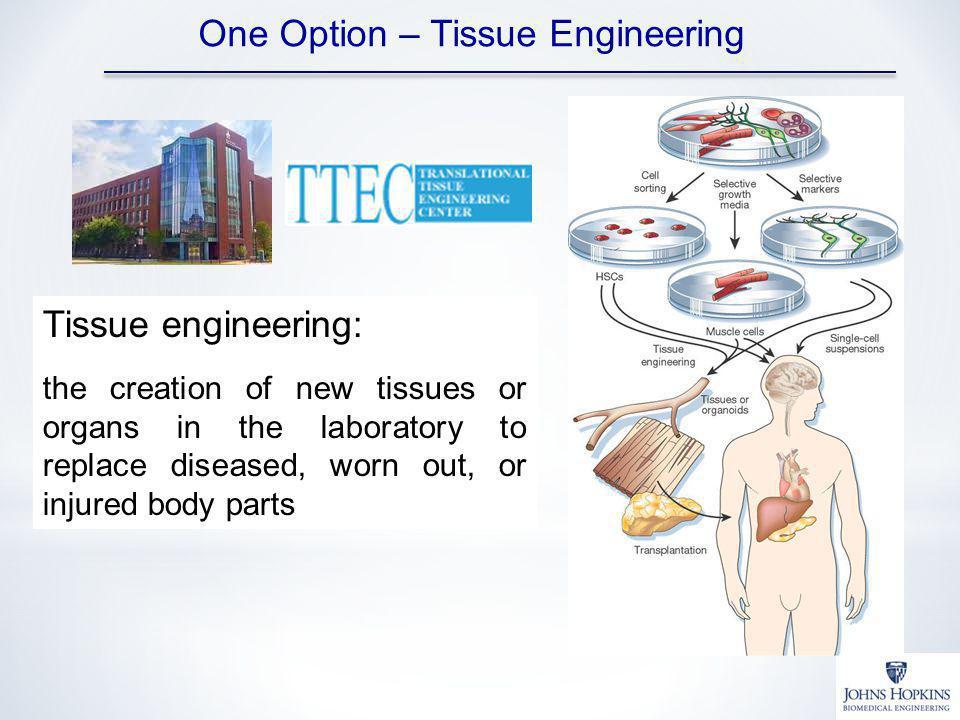 One Option – Tissue Engineering