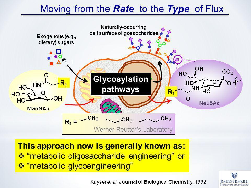 cell surface oligosaccharides