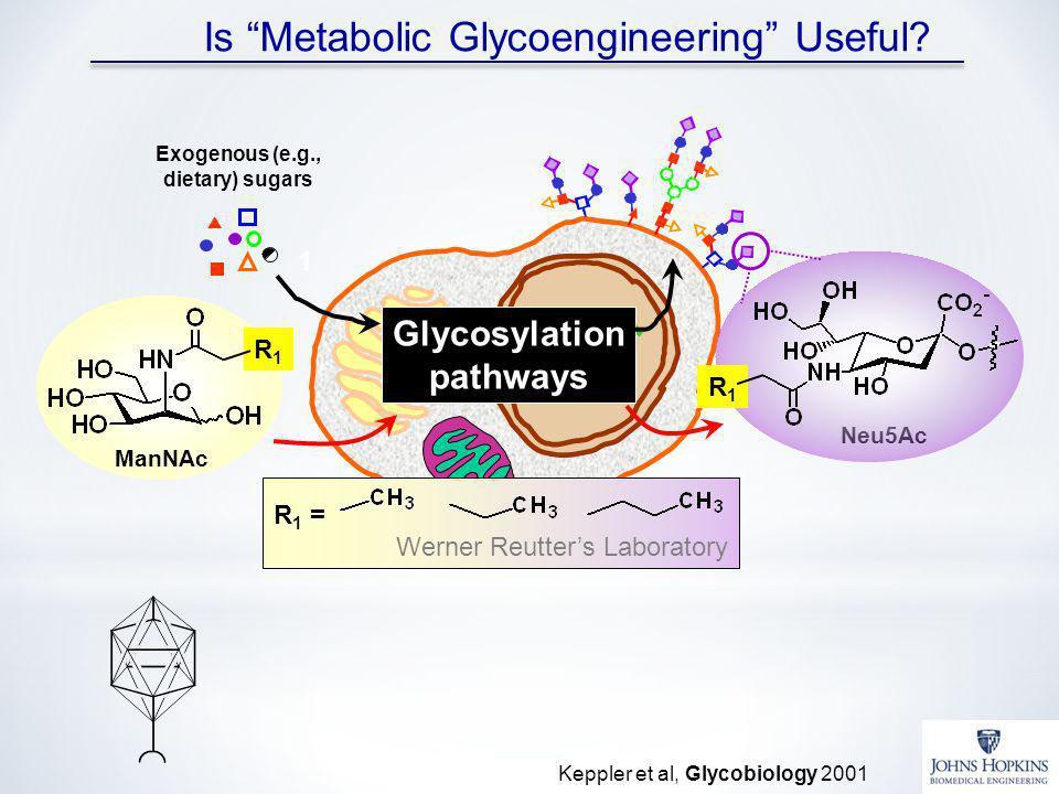 Is Metabolic Glycoengineering Useful