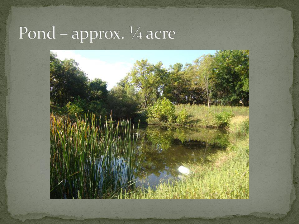 Pond – approx. ¼ acre