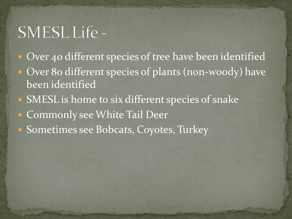 SMESL Life - Over 40 different species of tree have been identified
