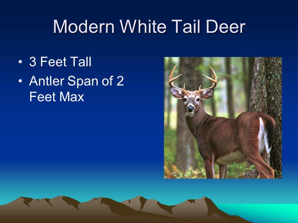 Modern White Tail Deer 3 Feet Tall Antler Span of 2 Feet Max