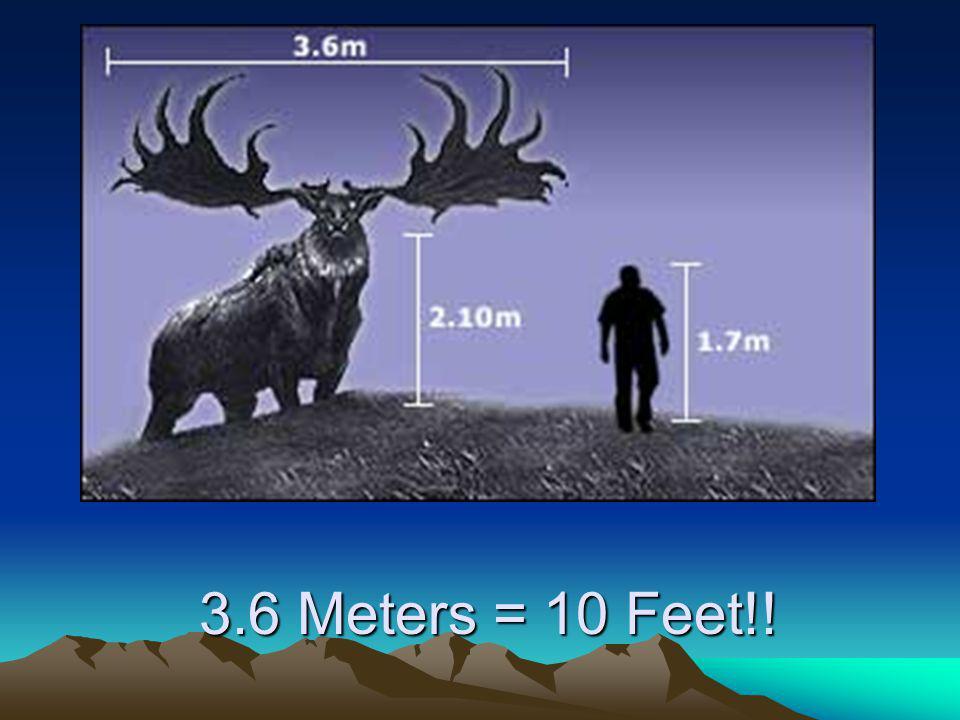 3.6 Meters = 10 Feet!!