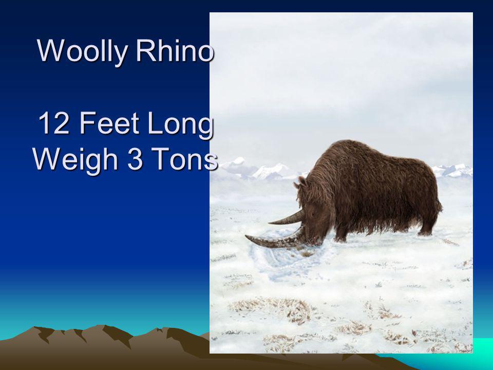 Woolly Rhino 12 Feet Long Weigh 3 Tons