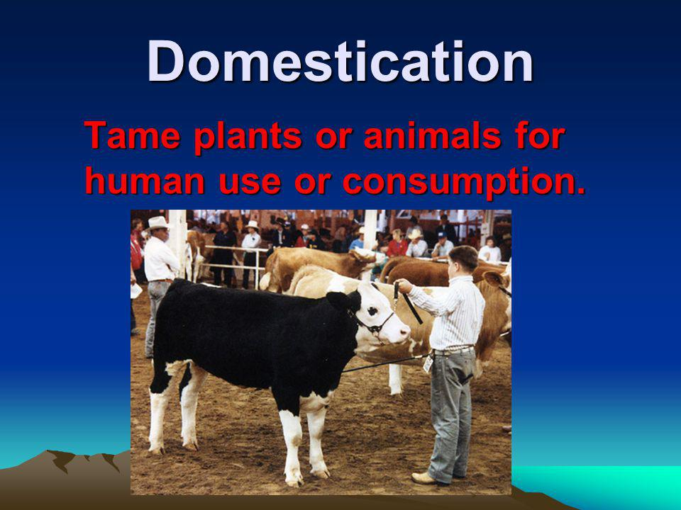 Domestication Tame plants or animals for human use or consumption.