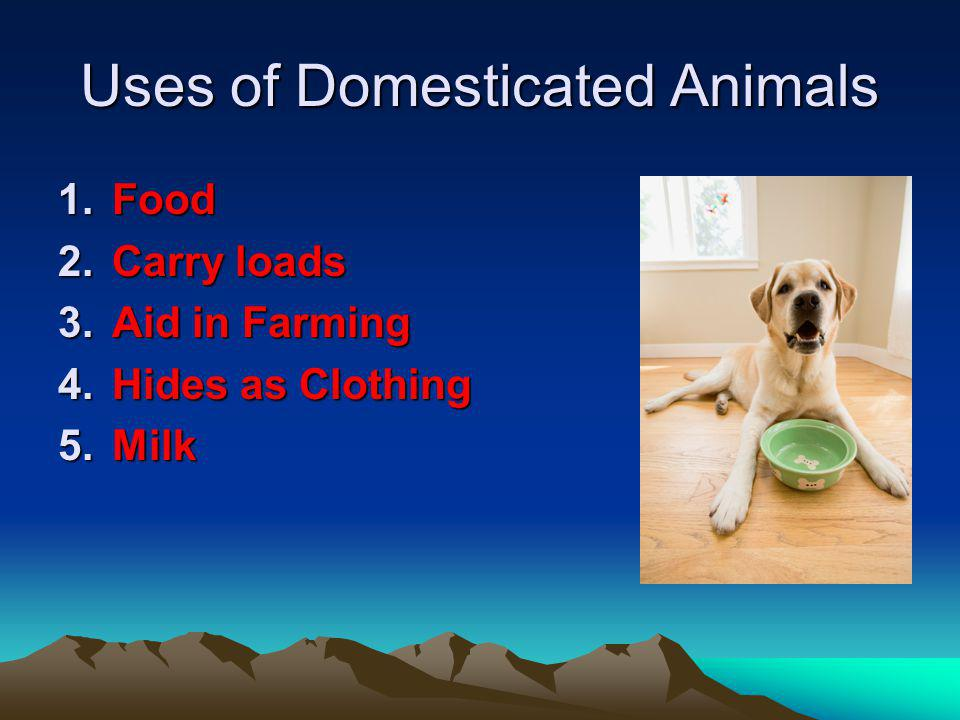 Uses of Domesticated Animals