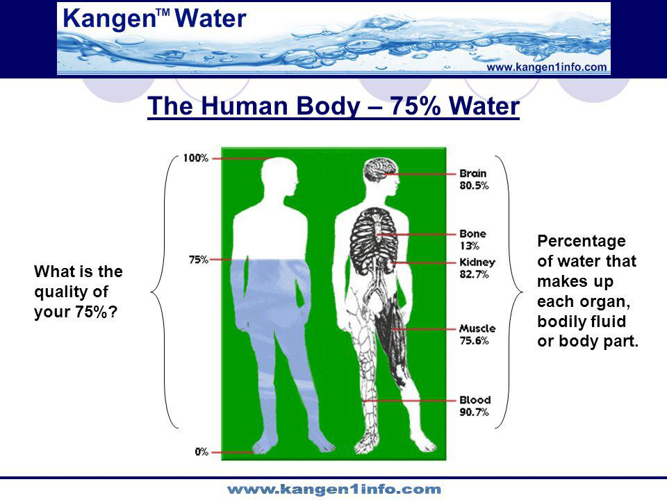 The Human Body – 75% Water Percentage of water that makes up each organ, bodily fluid or body part.