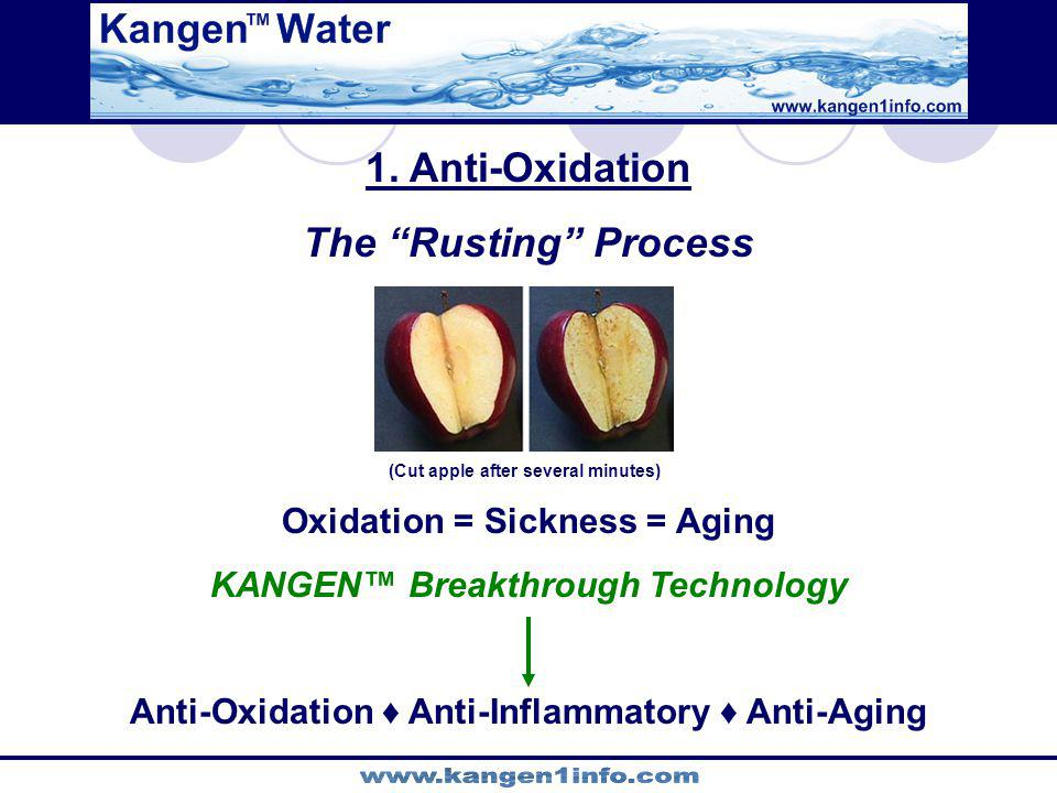 1. Anti-Oxidation The Rusting Process