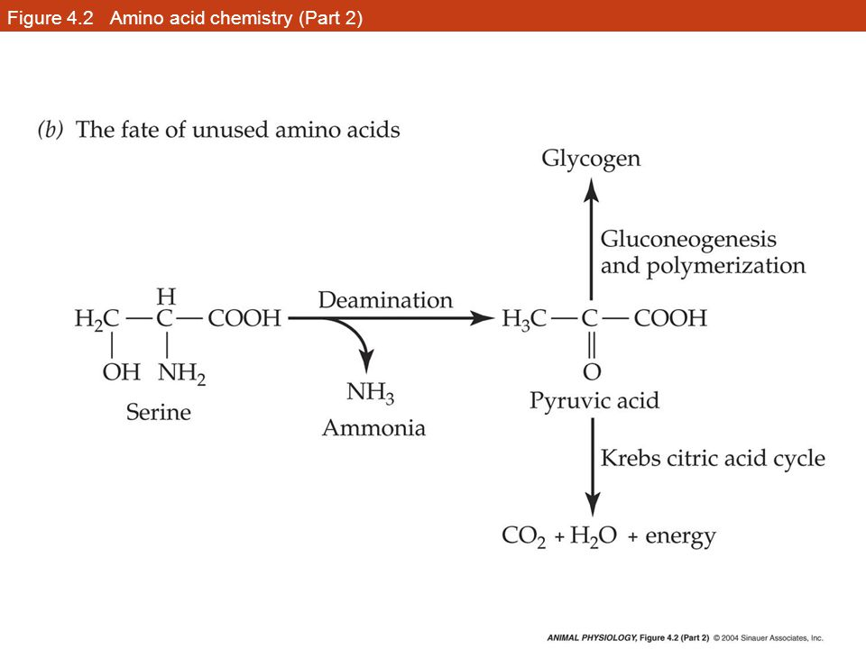 Figure 4.2 Amino acid chemistry (Part 2)