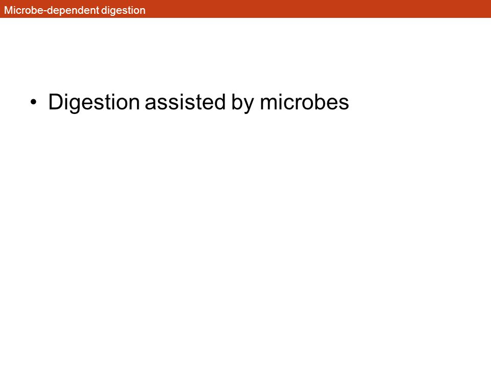 Microbe-dependent digestion