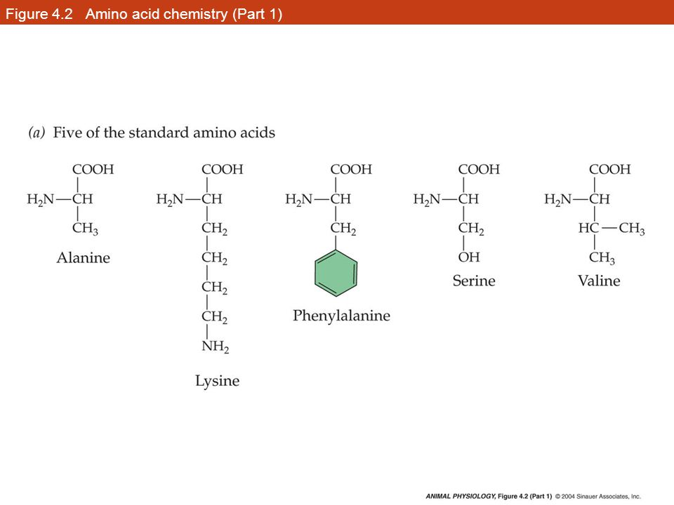 Figure 4.2 Amino acid chemistry (Part 1)