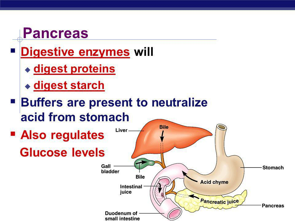 Pancreas Digestive enzymes will