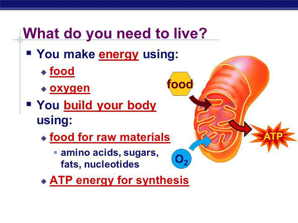 What do you need to live You make energy using: