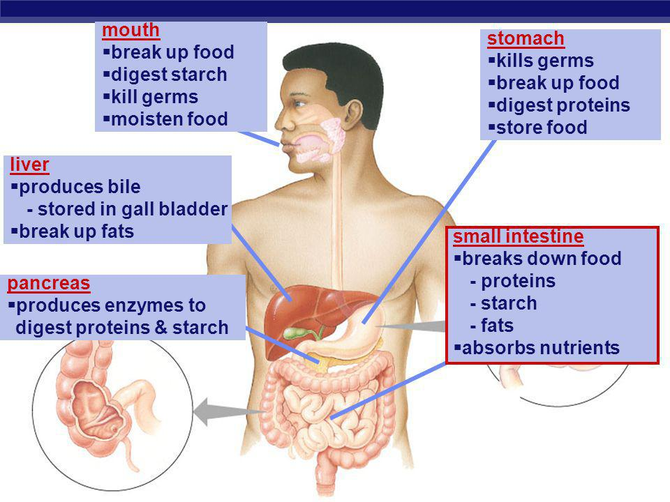 mouth break up food. digest starch. kill germs. moisten food. stomach. kills germs. break up food.
