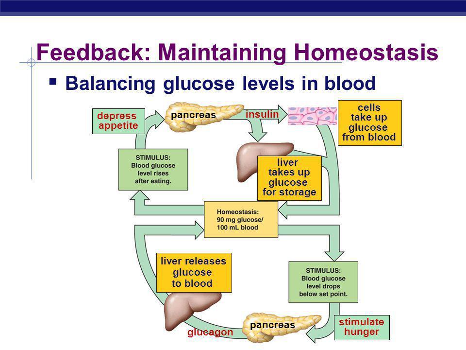 Feedback: Maintaining Homeostasis
