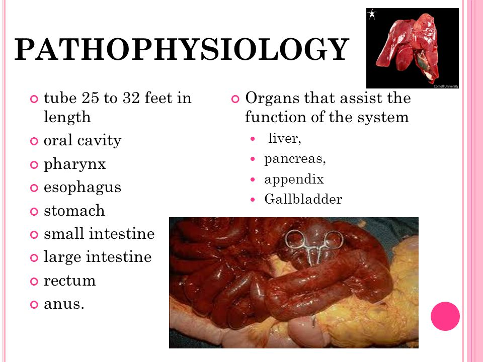 PATHOPHYSIOLOGY tube 25 to 32 feet in length oral cavity pharynx