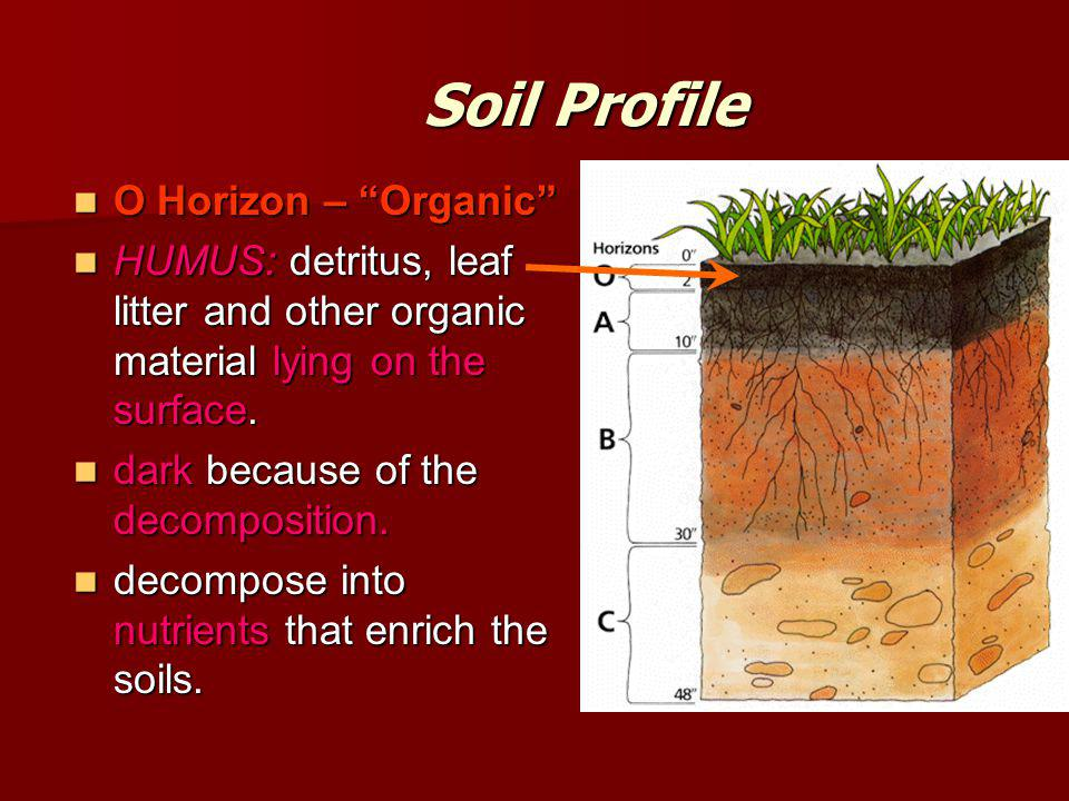 Soil Profile O Horizon – Organic