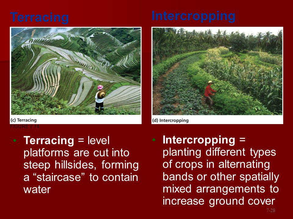Intercropping Terracing