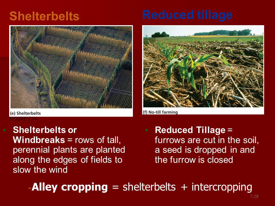 Reduced tillage Shelterbelts