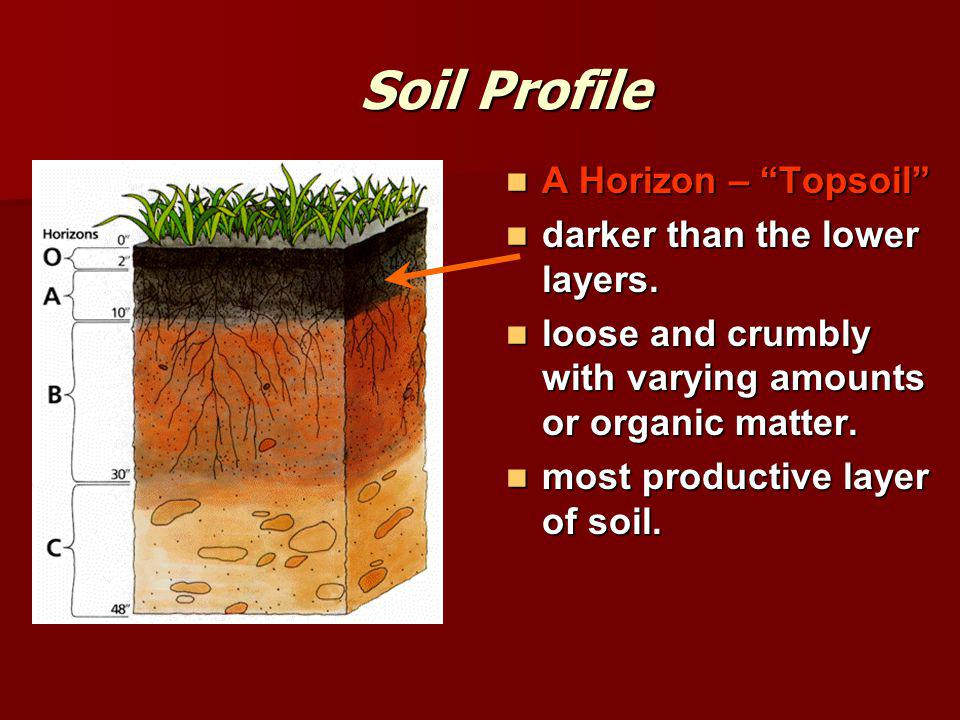Soil Profile A Horizon – Topsoil darker than the lower layers.