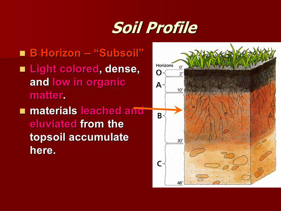 Soil Profile B Horizon – Subsoil