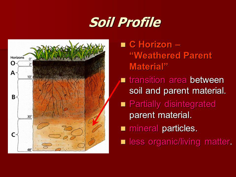 Soil Profile C Horizon – Weathered Parent Material
