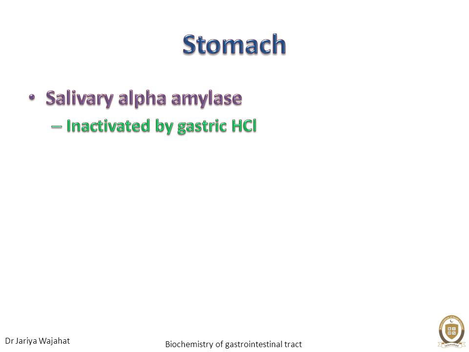 Stomach Salivary alpha amylase Inactivated by gastric HCl