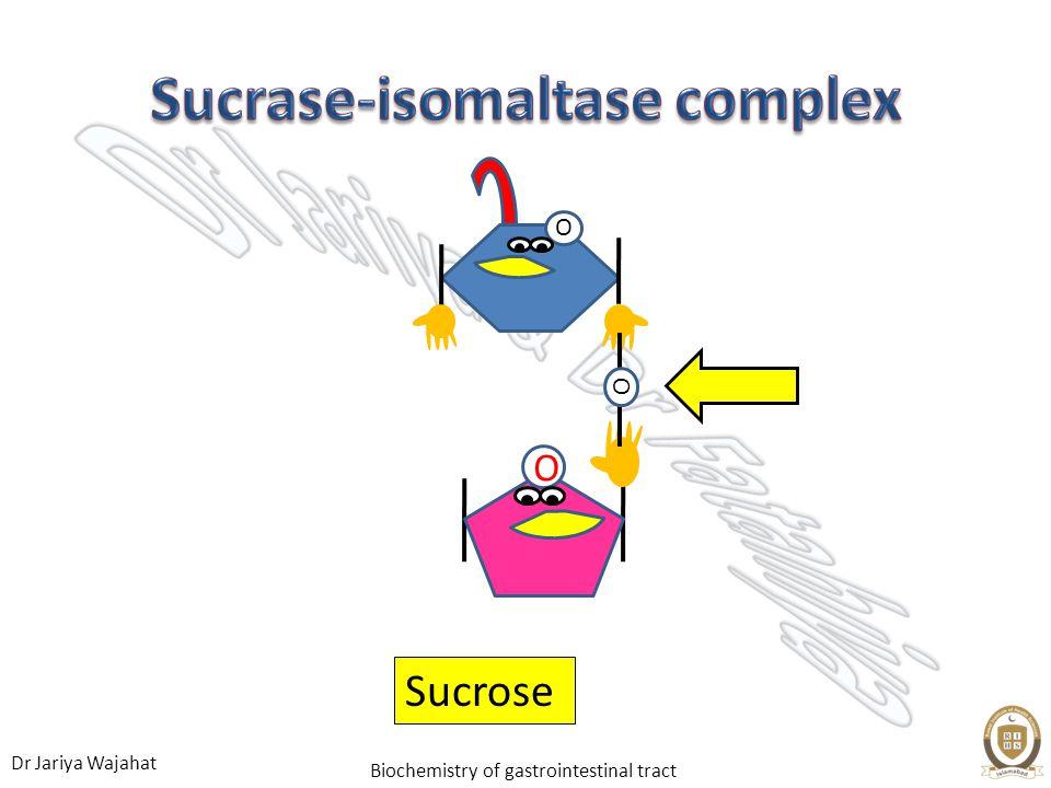 Sucrase-isomaltase complex