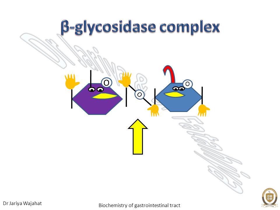 β-glycosidase complex