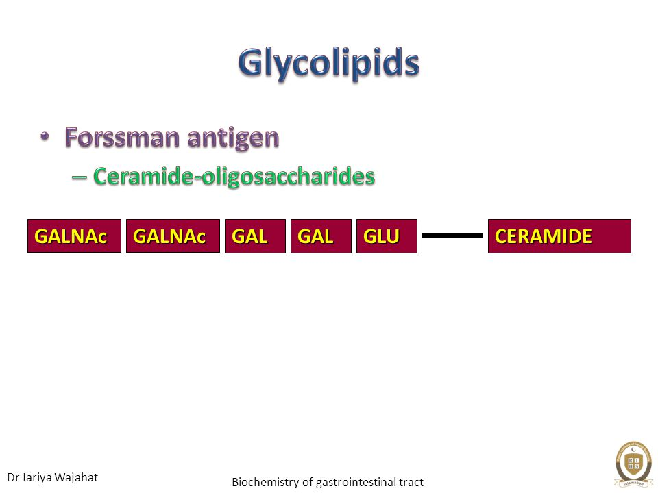 Glycolipids Forssman antigen Ceramide-oligosaccharides GAL CERAMIDE